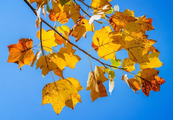 autumn-leaves-in-the-blue-sky